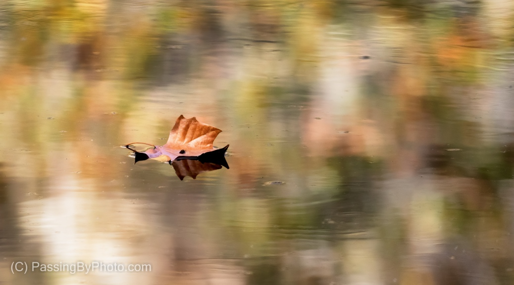 Leaf Floating on Mottled Pond
