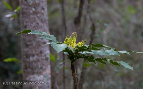 Holly With Yellow Flowers